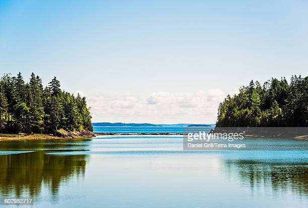 usa, maine, ilsboro, trees reflecting on sea surface - maine stock pictures, royalty-free photos & images