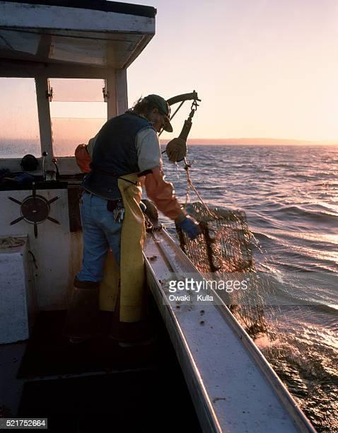Maine Lobsterman