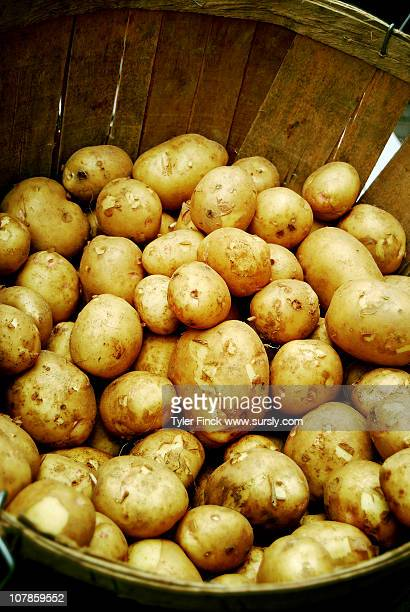 maine potatoes - sursly stock pictures, royalty-free photos & images