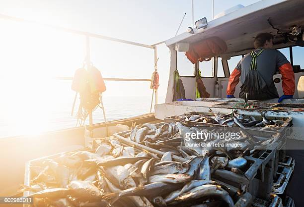 USA, Maine, St. George, Crates of fish on boat with fisherman standing in background