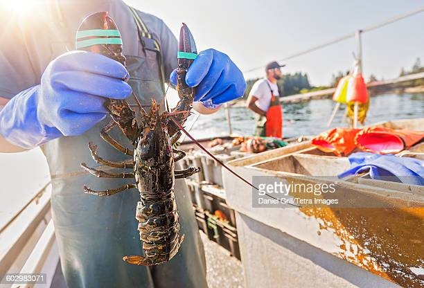 USA, Maine, St. George, Man showing lobster with fisherman in background
