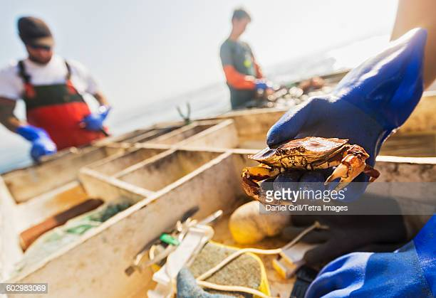 USA, Maine, St. George, Mans hand holding crab with two fisherman working in background