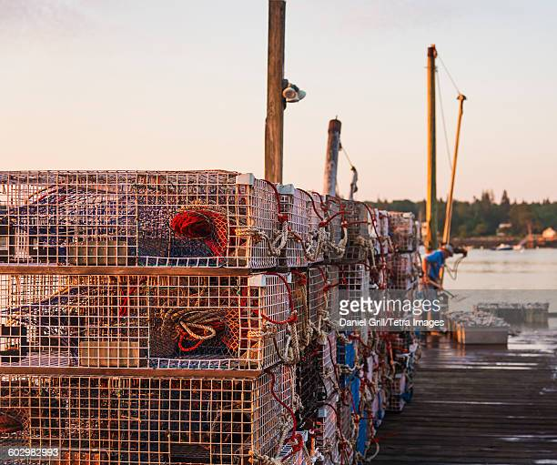 usa, maine, st. george, stacks of lobster traps on jetty at sunrise with man working in background - lobster fishing stock photos and pictures