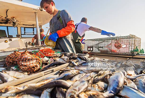 usa, maine, st. george, three fishermen working on boat - lobster fishing stock photos and pictures