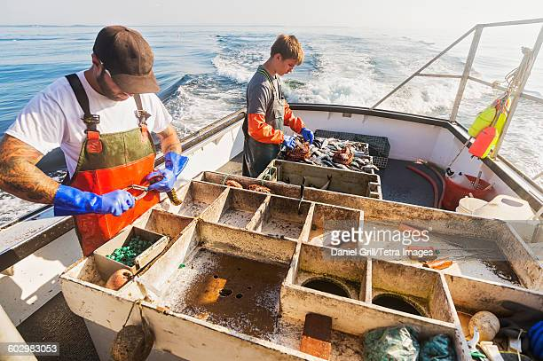 usa, maine, st. george, two fishermen working on boat - lobster fishing stock photos and pictures