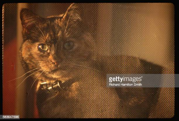 maisie cat relaxing behind screen - maisie smith stock pictures, royalty-free photos & images