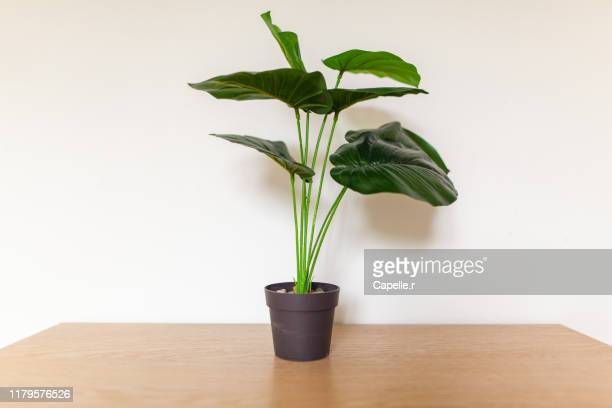 maison - fausse plante d'appartement - hérault stock pictures, royalty-free photos & images