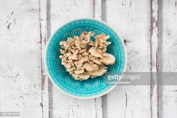 Maitake mushroom on wood (Grifola frondosa)