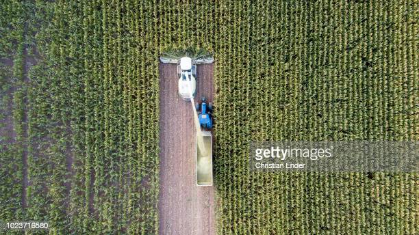 Maize harvest in Germany at sunset