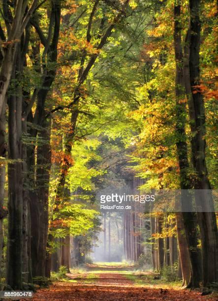 majestueuze lanen in herfst kleuren van het blad - voetpad stockfoto's en -beelden