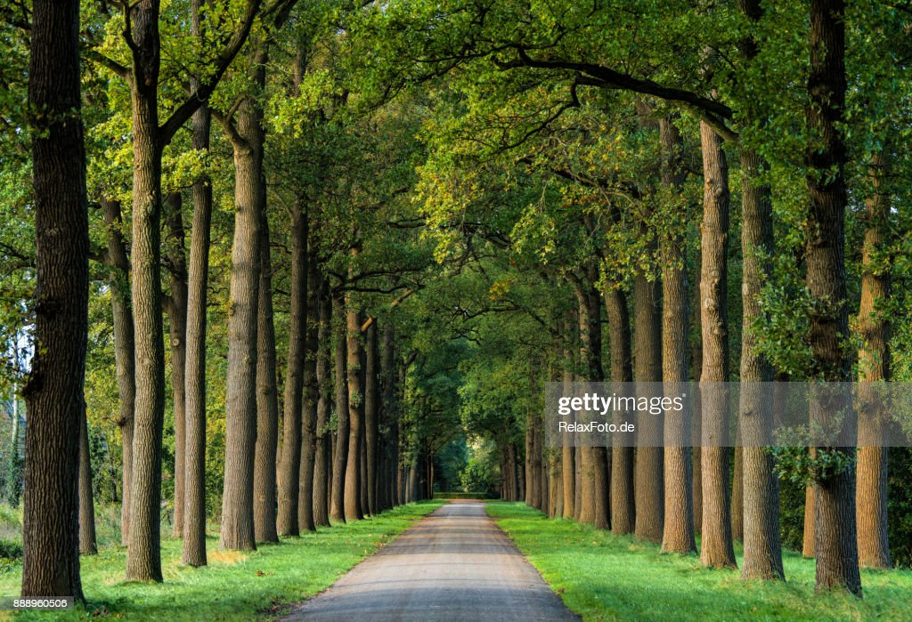 Majestic avenues in autumn leaf colors : Stock Photo