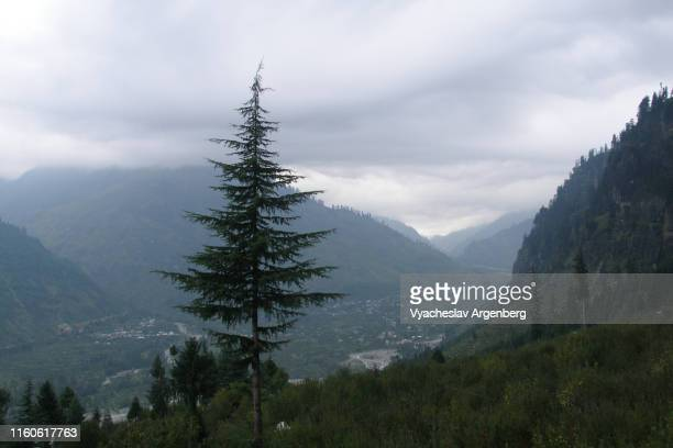 majestic kullu valley, himalaya, india - argenberg stock pictures, royalty-free photos & images