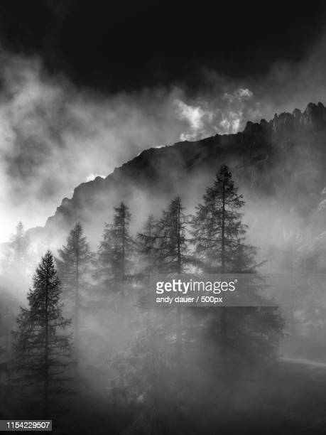 majestic landscape with view of mountains and evergreen trees - andy dauer stock photos and pictures