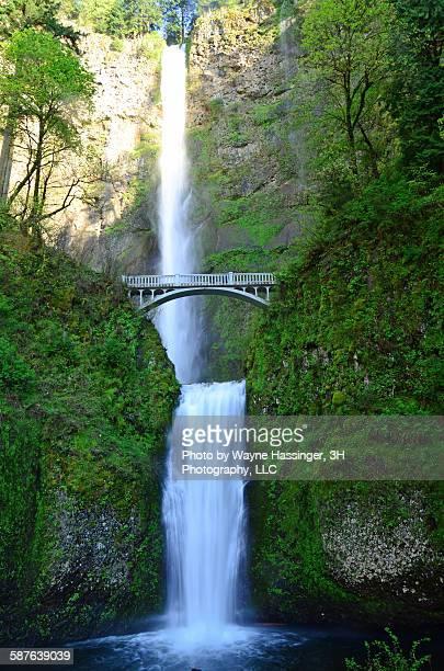 majestic multnomah falls - multnomah falls stock photos and pictures