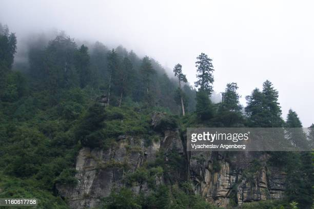 majestic pine and deodar forest on the slopes of kullu valley, himalaya - argenberg stock pictures, royalty-free photos & images