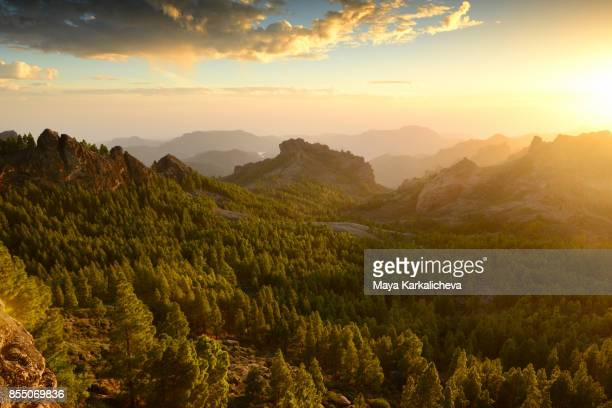 Majestic sunset from Roque Nublo with view of volcanic mountain range and pine trees, Canary islands