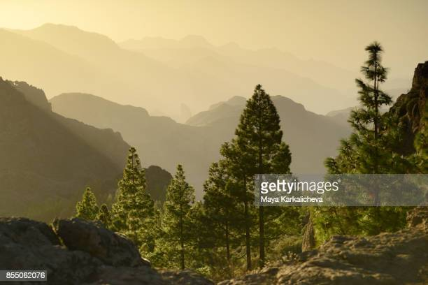 majestic sunset from volcanic mountain range in canary islands - pine woodland stock pictures, royalty-free photos & images