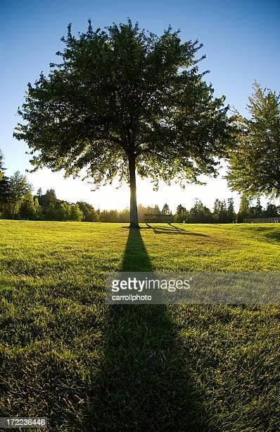 Majestic Tree at Dusk