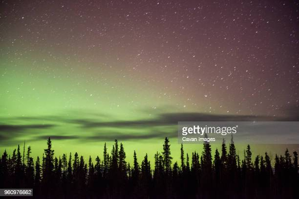 Majestic view of aurora borealis in star field over trees