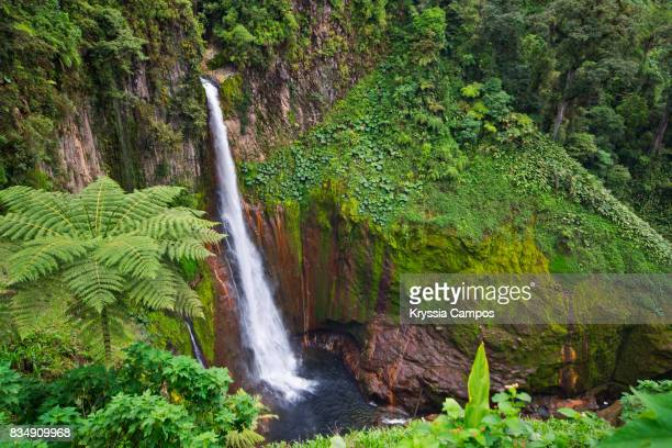 Majestic waterfall at rainforest: Catarata del Toro