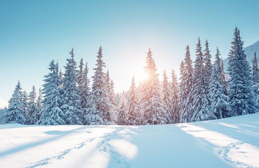 Majestic winter landscape. Location Carpathian mountains, Ukraine, Europe. 1060619400