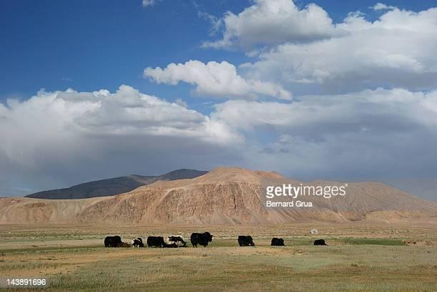 majesty of pamir plateau - bernard grua photos et images de collection