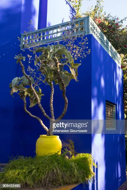 Majorelle Blue from the house in the garden at the Majorelle Garden on January 04 2018 in Marrakesh Morocco The Jardin Majorelle in Marrakech is one...