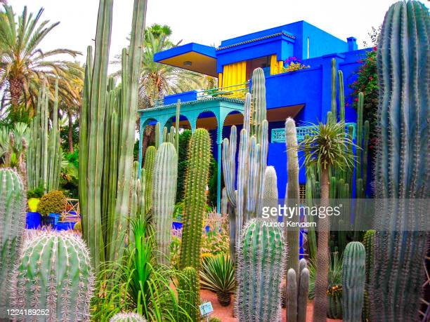 jardines majorelle, marrakech. - cultura marroquí fotografías e imágenes de stock