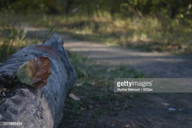 make like a tree and leaf