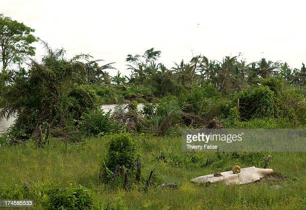 A makeshift grave lies along a subsidiary of the Irrawaddy River According to official figures the cyclone killed about 140000 people on May 2 and 3...