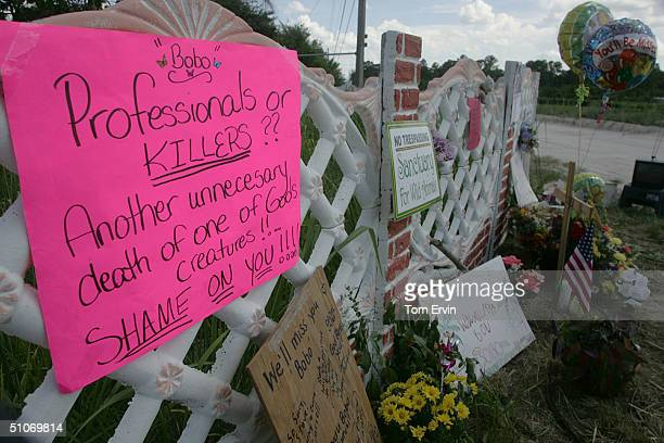 A makeshift memorial protests the killing of Bobo the 600pound tiger who escaped his south Florida home July 14 2004 in Loxahatchee Florida The...