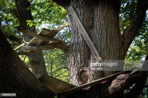 Makeshift treehouse in oak tree in Maine