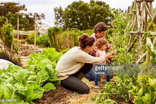 Making gardening a bonding experience