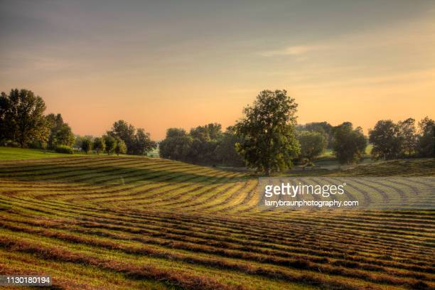 making hay - missouri stock pictures, royalty-free photos & images