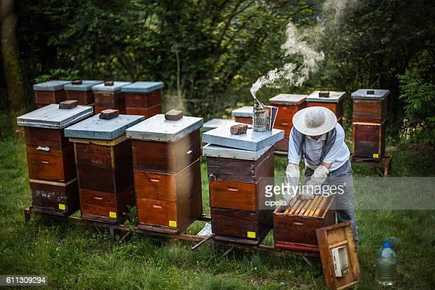 ハチミツ作り - 養蜂 ストックフォトと画像