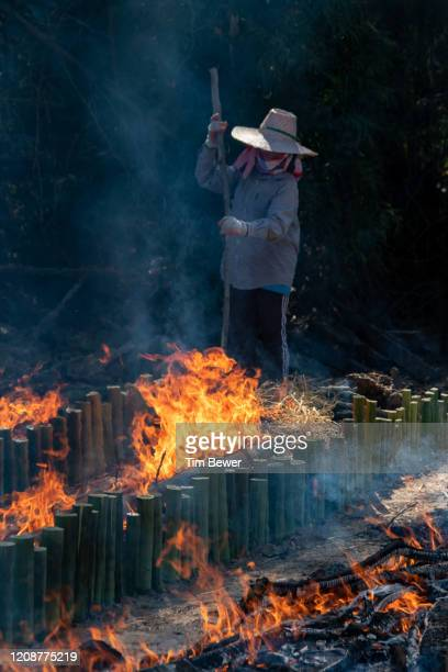making khao lam sticky rice snack. - tim bewer stock pictures, royalty-free photos & images