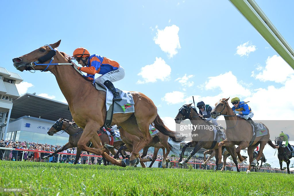 Making Mayhem ridden by Rhys McLeod wins No Fuss Event Hire BM70 Handicap at Geelong Racecourse on October 19, 2016 in Geelong, Australia.