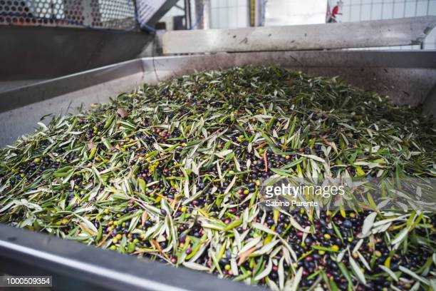 Making of Olive Oil