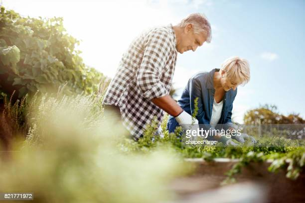 Ervoor te zorgen dat hun tuin is in tip-top conditie