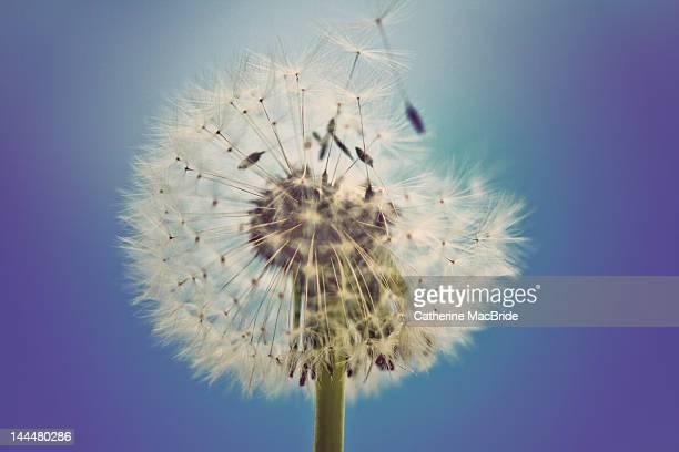 making wishes - catherine macbride stock-fotos und bilder