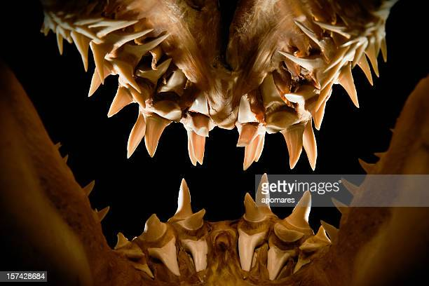 Mako shark jaws terrifying toothy silhouette