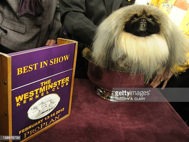 Malachy, a Pekingese, after winning Best in Show during the 136th Westminster Kennel Club Annual Dog Show held at Madison Square Garden February 14,...