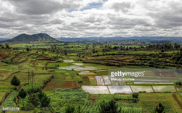 Malagasy rice fields and mountain in distance