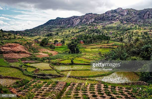 Malagasy rice fields and mountains