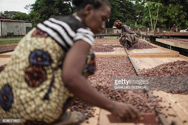 Malagasy workers from the MAVA Cacao plantations spread Cacao sundried beans at the plantation farm on November 30 2016 in the Madagascar Cacao...