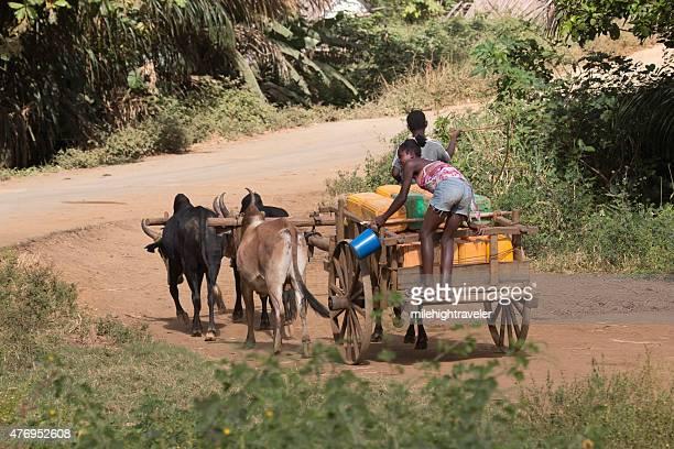 malagasy zebu einkaufswagen paar heben wasser auf unebenem madagaskar highway - ox cart stock-fotos und bilder