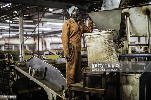 A Malawian man stands on top of an industrial machine at the Makandi Tea Estate factory on April 16 2015 in Thyolo southern Malawi Tobacco and tea...
