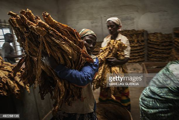 Malawian workers prepare tobacco leaves to be packed and stored ahead of an auction at a tobacco farm on May 20 2014 in Zomba Municipality Malawi...