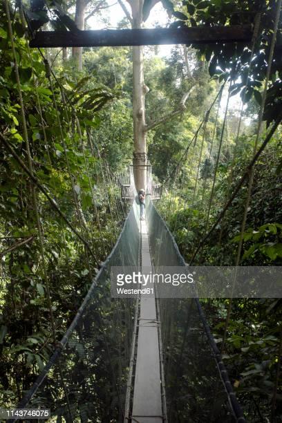malaysia, borneo, sabah, kinabalu park, female photographer on canopy walk - treetop stock pictures, royalty-free photos & images