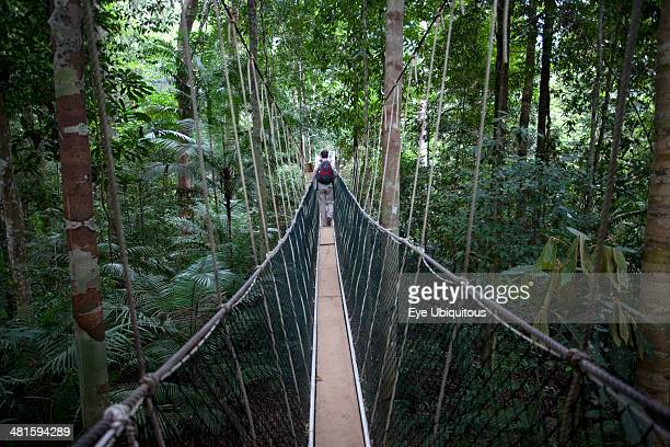 Malaysia Central Pahang Taman Negara People wandering on the canopy walkways of the worlds oldest rainforest Ecotourism